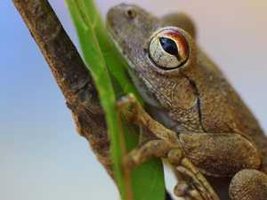 Eungella Rainforest wonders 'would meet UNESCO standard'
