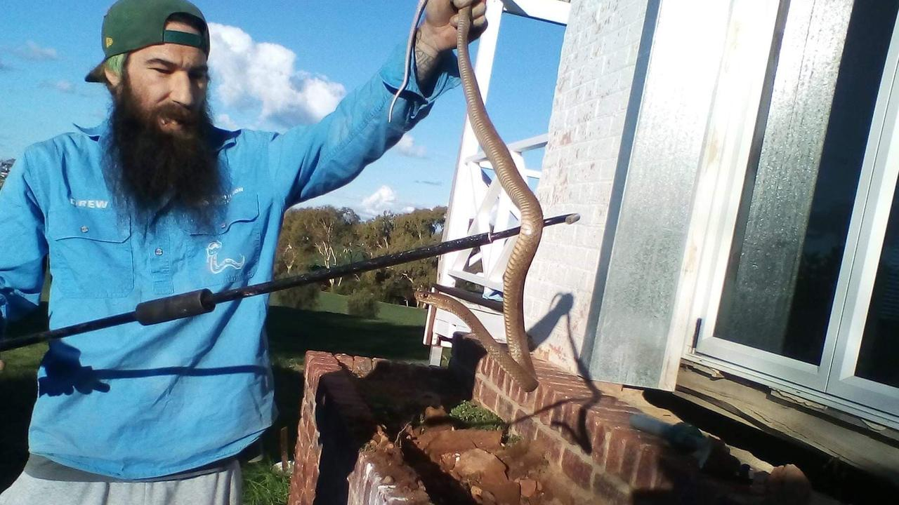 SAVING LIVES: Granite Belt snake catcher Drew Godfrey hopes the sessions will bring about better awareness for snakes.