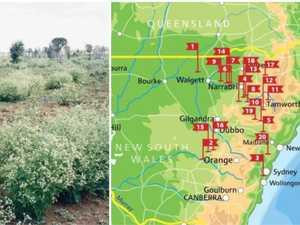 Bid to stop spread of 'devastating' weed on Coffs Coast