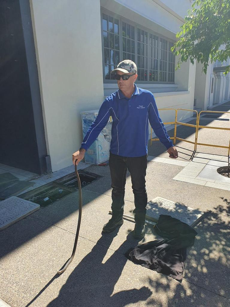 Jamie Chapel caught a venomous eastern brown snake in Townsville's CBD on Friday, July 31, 2020. Picture: Jamie Chapel