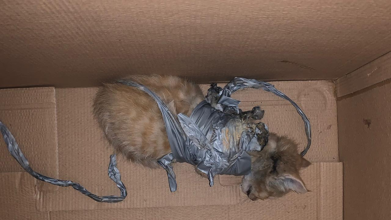 The dumped kitten was taken to the RSPCA at Wacol.