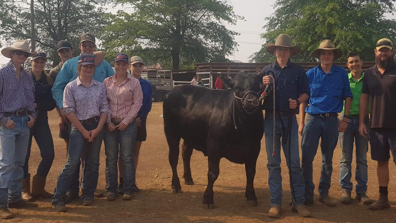 Maclean High School students are about to start competing in steer competitions.