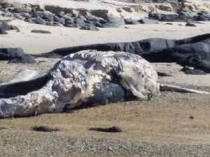 Grisly discovery made on North Coast beach