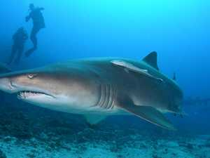 Is the water really 'teeming' with sharks?