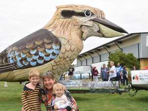 Gallery: Giant Laughing Kookaburra visits Gladstone