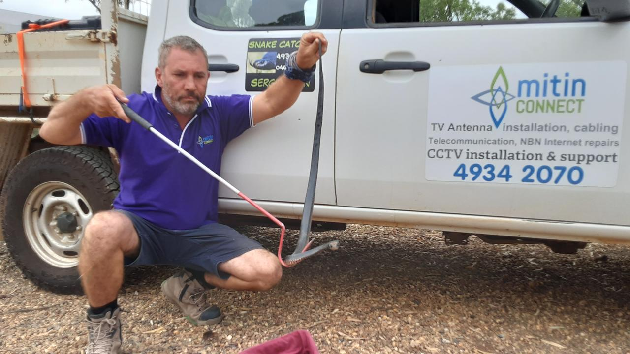 Owner of Mitin Connect: CQ Snake Catching Sergii Mitin removing a snake for relocation. Picture: Contributed