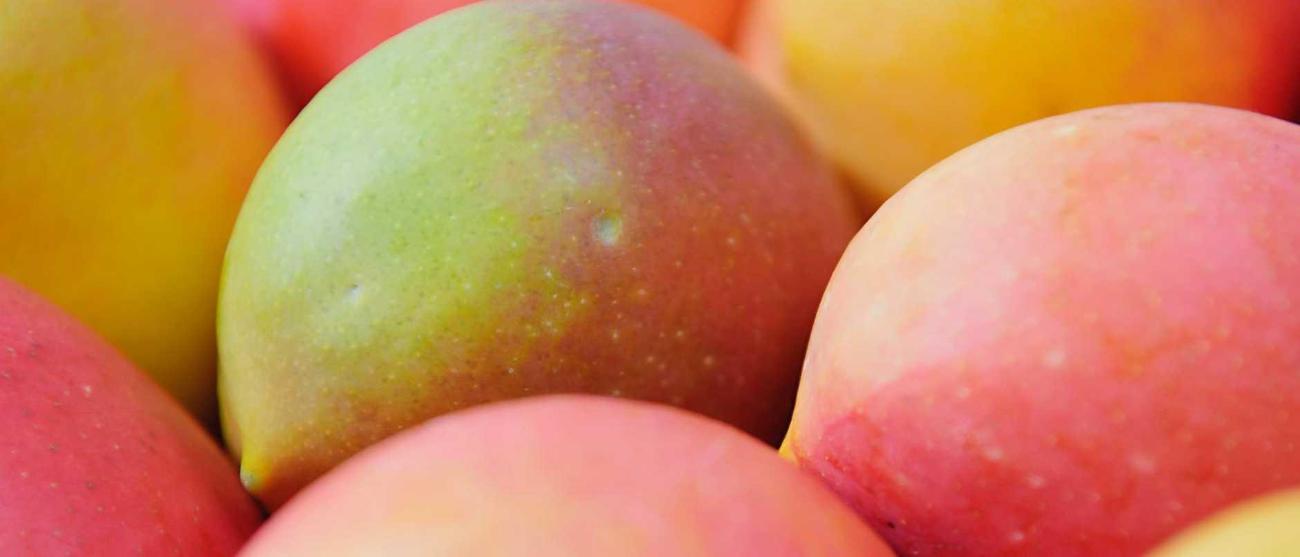 Mango species