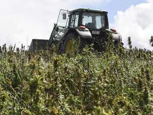 Where cannabis pioneer will build $50m hemp factory