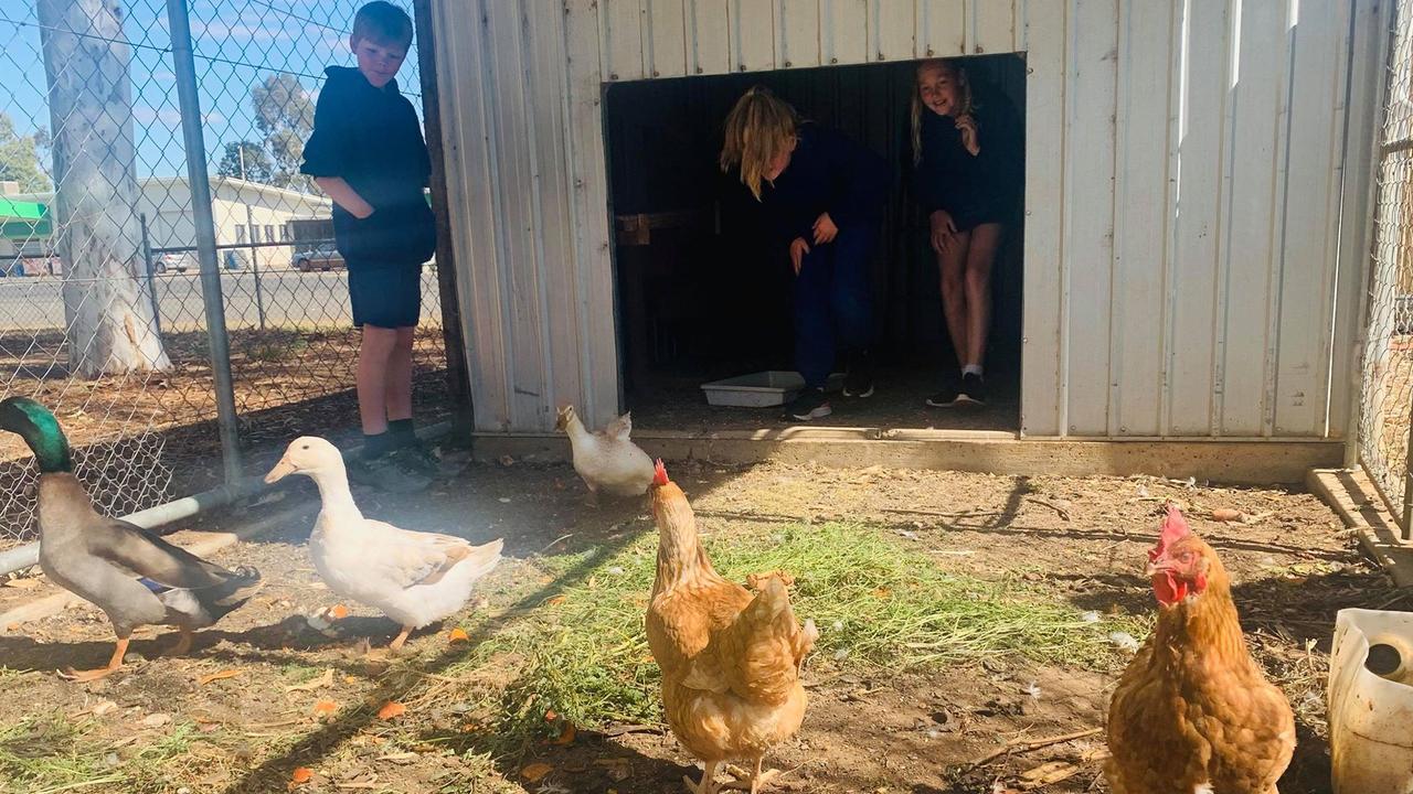 Mitchell State School – My Kitchen Garden