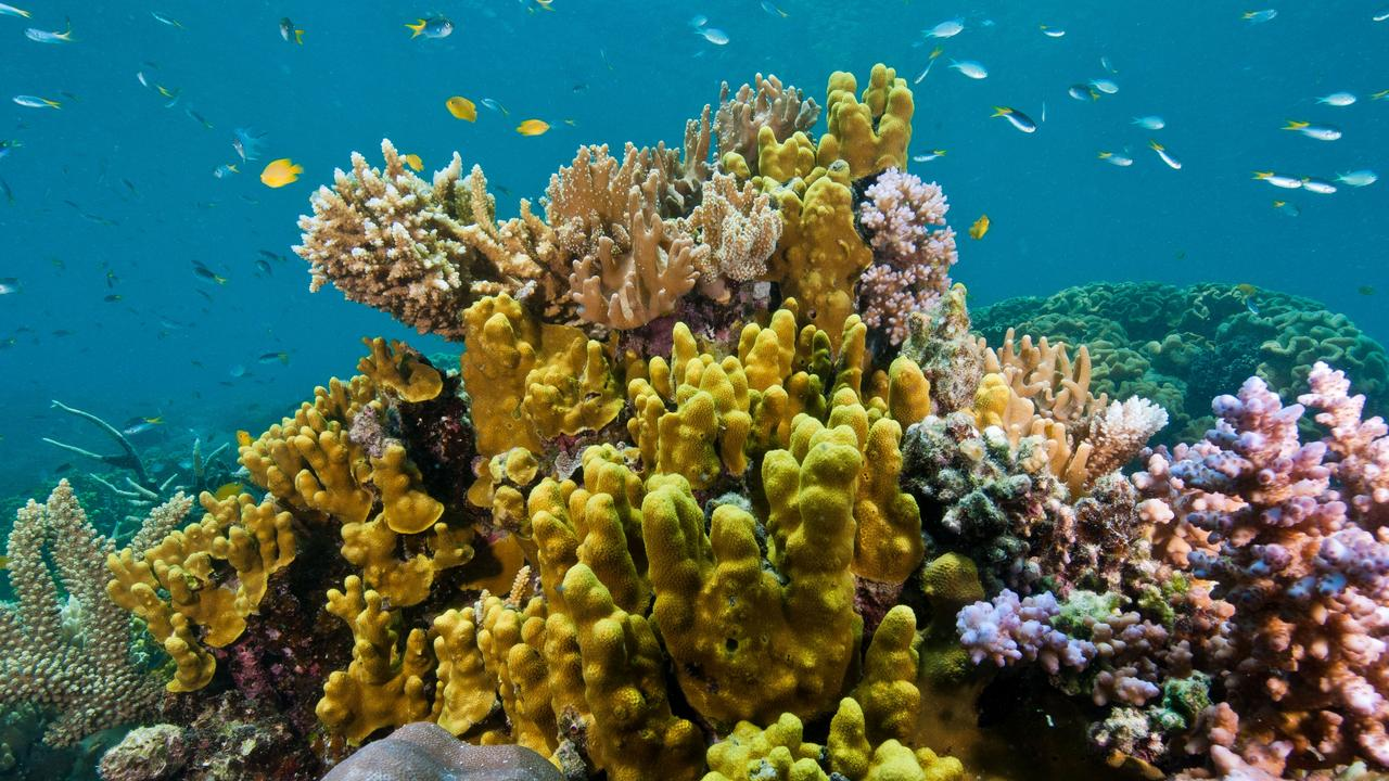 Fitzroy Basin Association have this week vowed to join the fight to protect Queensland's Great Barrier Reef.