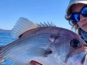 GONE FISHIN': Record-breaking Tailor for Iluka angler