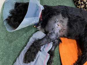 'People needed to be warned': Rehomed dog attacks family pet