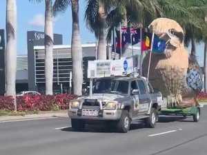 Giant Kookaburra visits Rocky