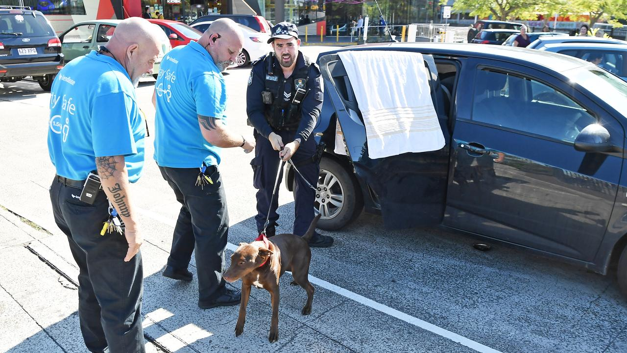 A police officer leashed the dog and kept it until owners appeared to return to the vehicle. Photo Patrick Woods / Sunshine Coast Daily.