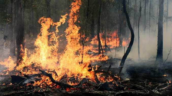 Firefighters battle after-dark vegetation fire