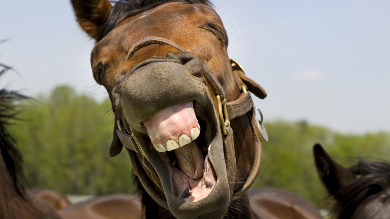 No laughing matter: A Melbourne man was fined for feeding some horses.