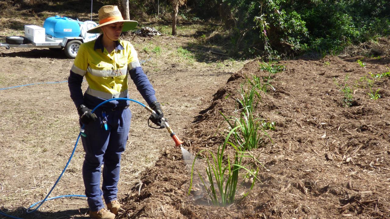 Une parcelle de terrain de 1100 m2 adjacente à Auckland Creek abrite désormais plus de 370 plantes indigènes.