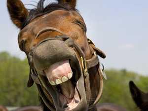 Man's $1652 fine for 'feeding horses'