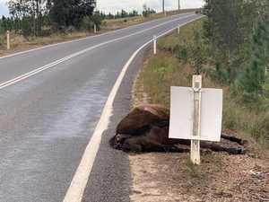Wild horse warning on Coast road
