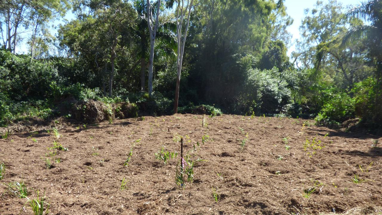 Chris Cameron, membre du Conseil, a déclaré que l'exercice de plantation d'arbres devait à l'origine coïncider avec la Journée nationale de l'arbre le 2 août.