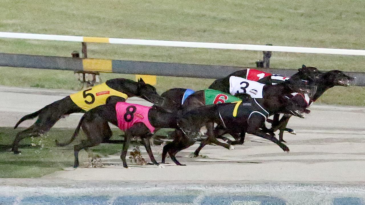 Racing tribunal disqualifies a greyhound trainer for using a 'needle and thread' on a mauled dog without anaesthetic or veterinary qualifications.