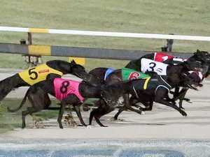 Greyhound trainer stitched up dog without anaesthetic