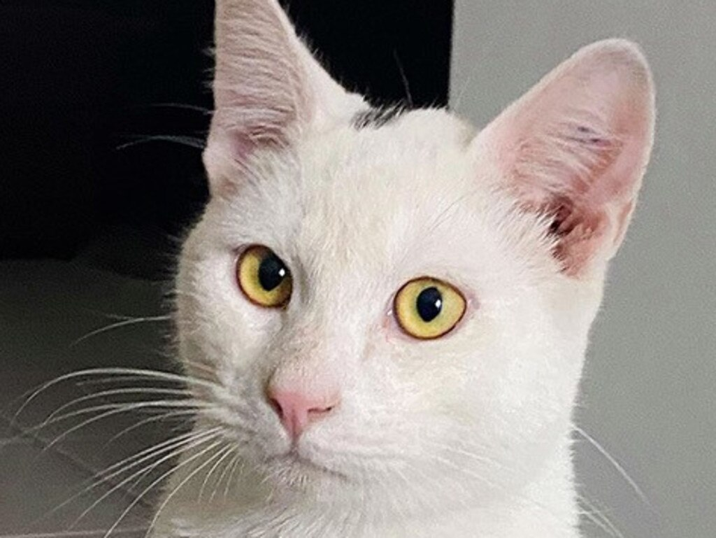 Stewart was born in May, 2018 and is looking for his forever home.