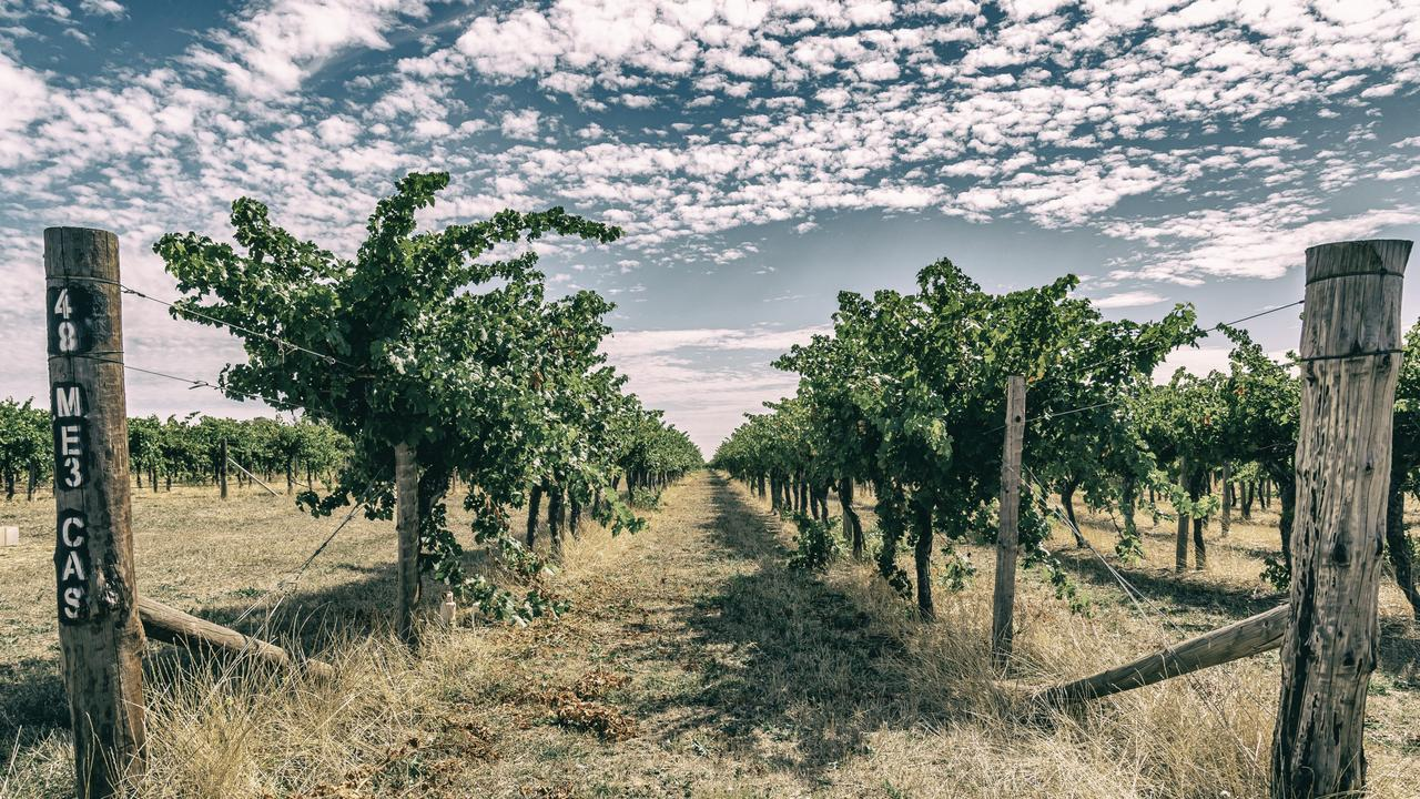 MEMORIES: Peppi Bueti remains fond of vineyards such as Wynns Coonawarra. Picture: John Kraeger