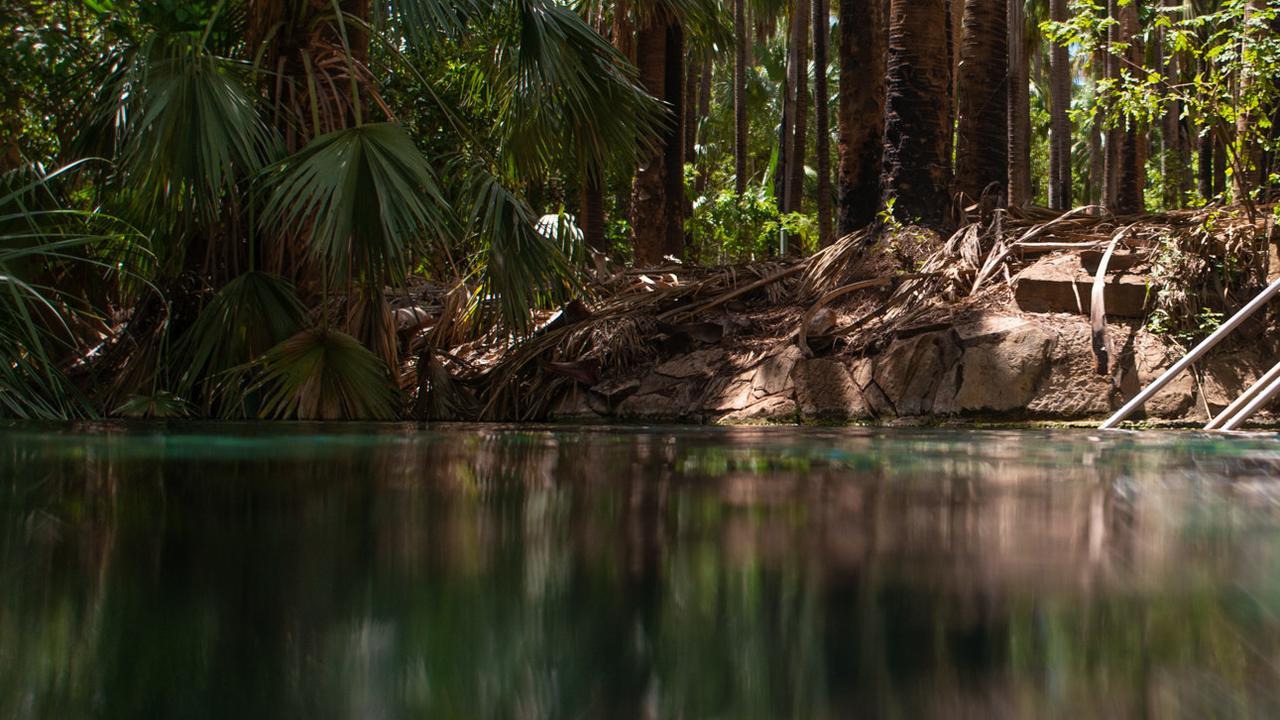 A 23-year-old man has drowned at Mataranka Hot Springs overnight.