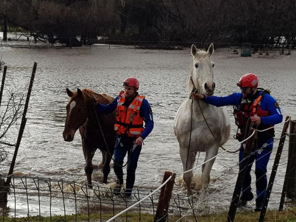 NSW State Emergency Service flood rescue technicians lead two horses from floodwaters near Bungendore. Picture: Supplied