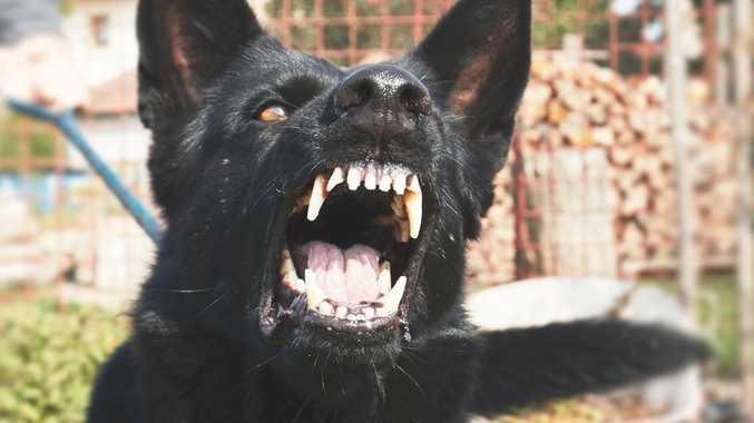 Revealed: Southeast's dog attack hot spots
