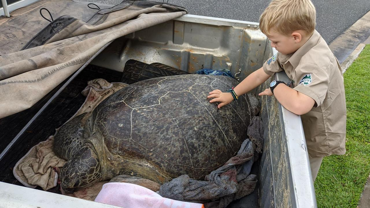 Bluey Harris and her son Owen rescue a turtle from Nine Mile Beach after was found lying severely injured.