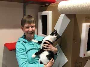 Kooky Covid hobby No1: cat castles