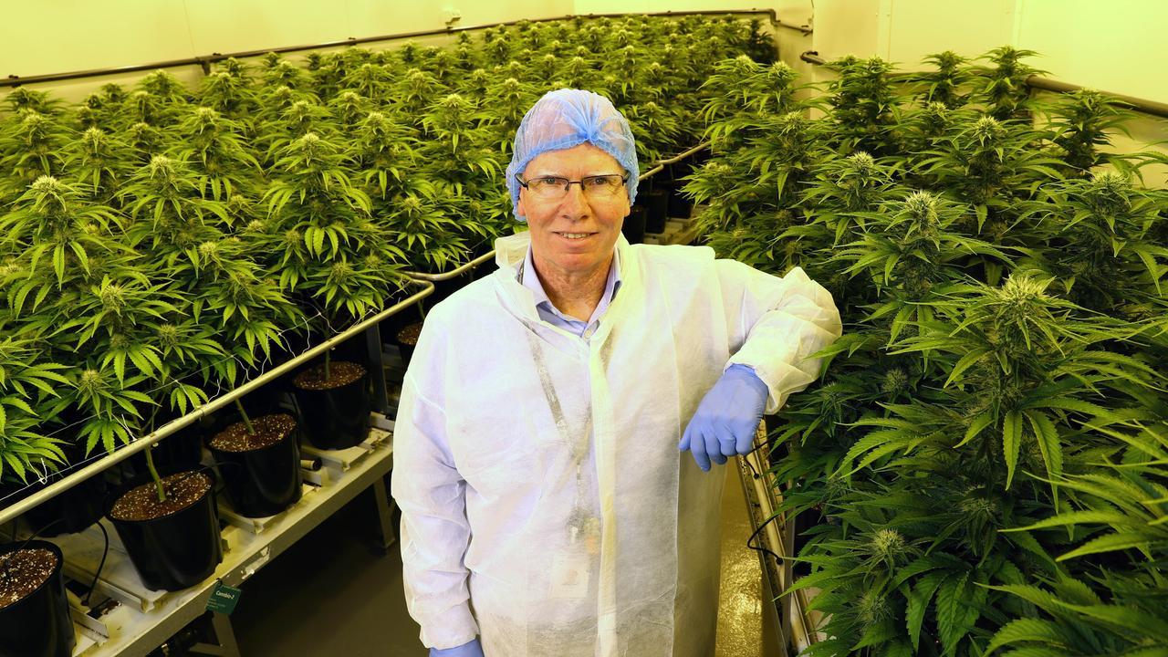 Peter Cross, PDG de Cann Group Limited, avec de la marijuana médicale qu'ils cultivent dans leur établissement. Aaron Francis / L'Australien