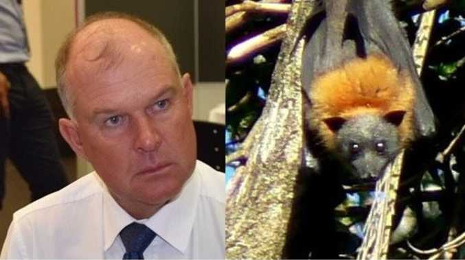 Flying foxes must be moved from Gympie homes urgently: MP