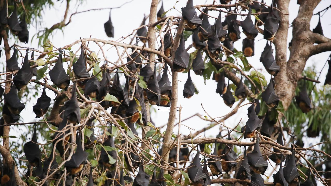 Gympie residents under seige from the new flying fox colony in COmmissioners Gully feel they have been let down by government authorities.