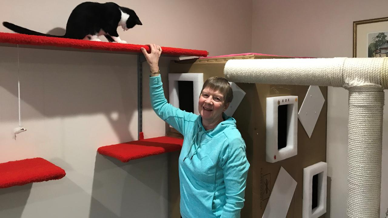 Cheryl Cooper's new Covid-inspired hobby is building cat castles.