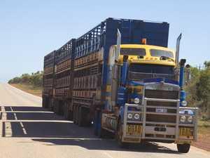 UPDATE: Driver uninjured in cattle truck rollover