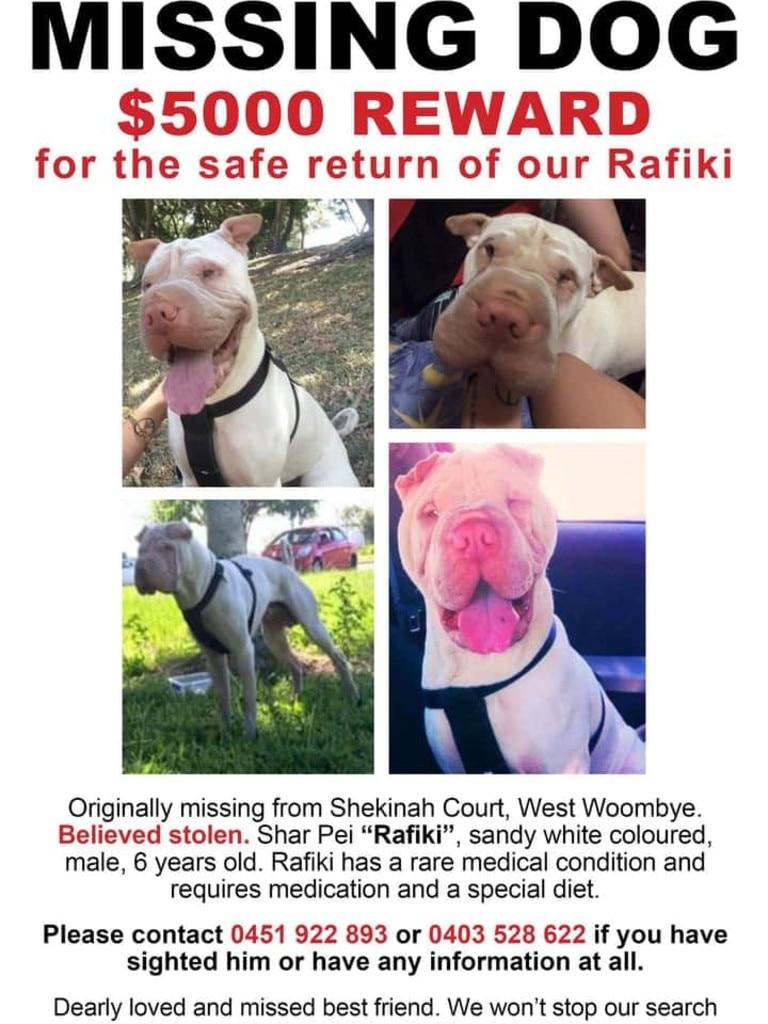 Flyers of missing shar pei Rafiki.