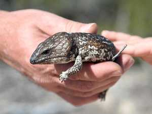 Man accused of lizard cruelty