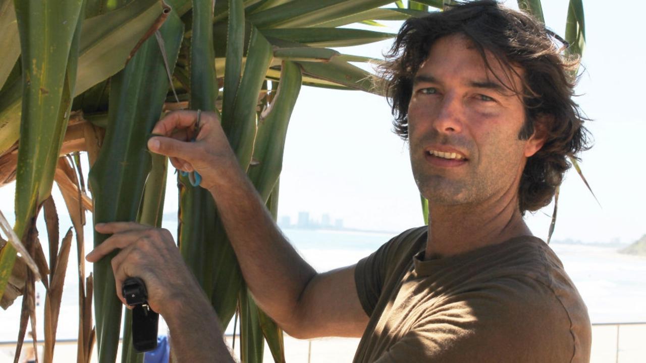 Joel Fostin examining a pandanus tree on the Sunshine Coast.
