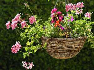 GARDENING: Perfect time to prepare Spring hanging baskets