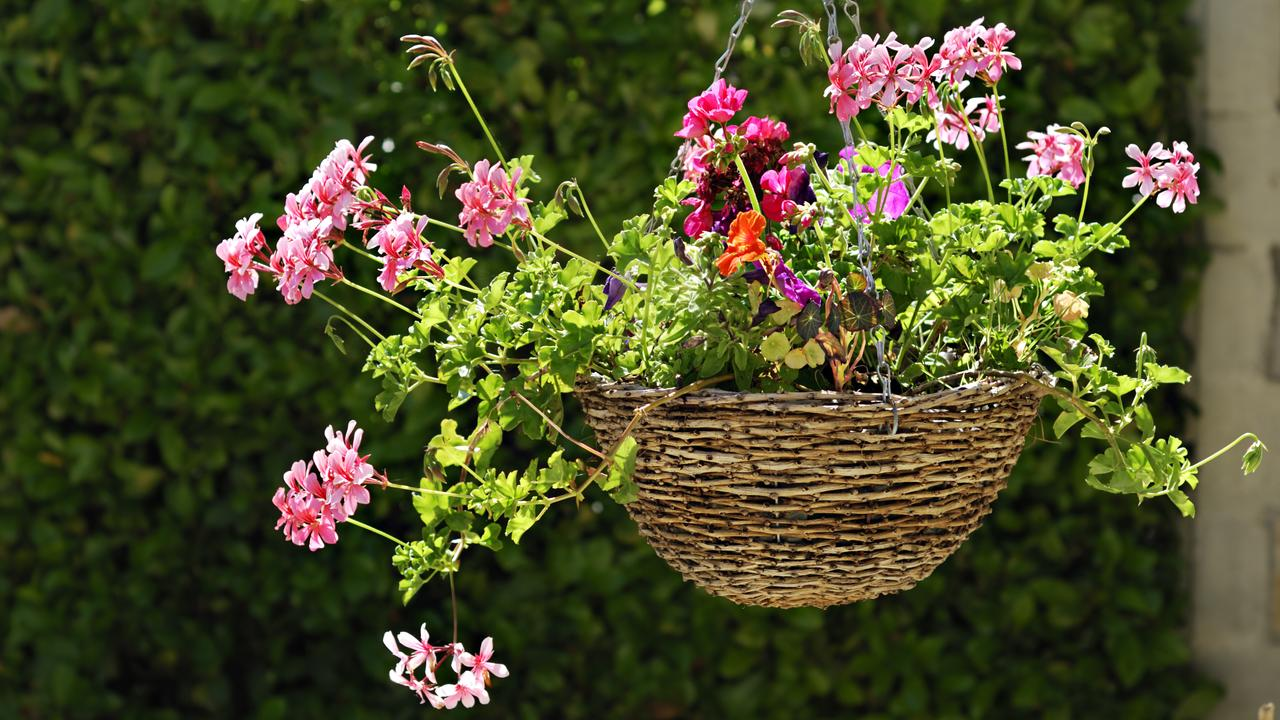 Decorative hanging basket of flowers in a garden.