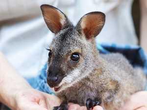Surprise! Moment wildlife wonderwoman got great news