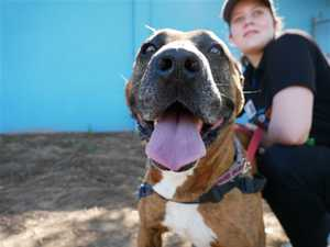 ADOPT: Furry friends you can adopt right now