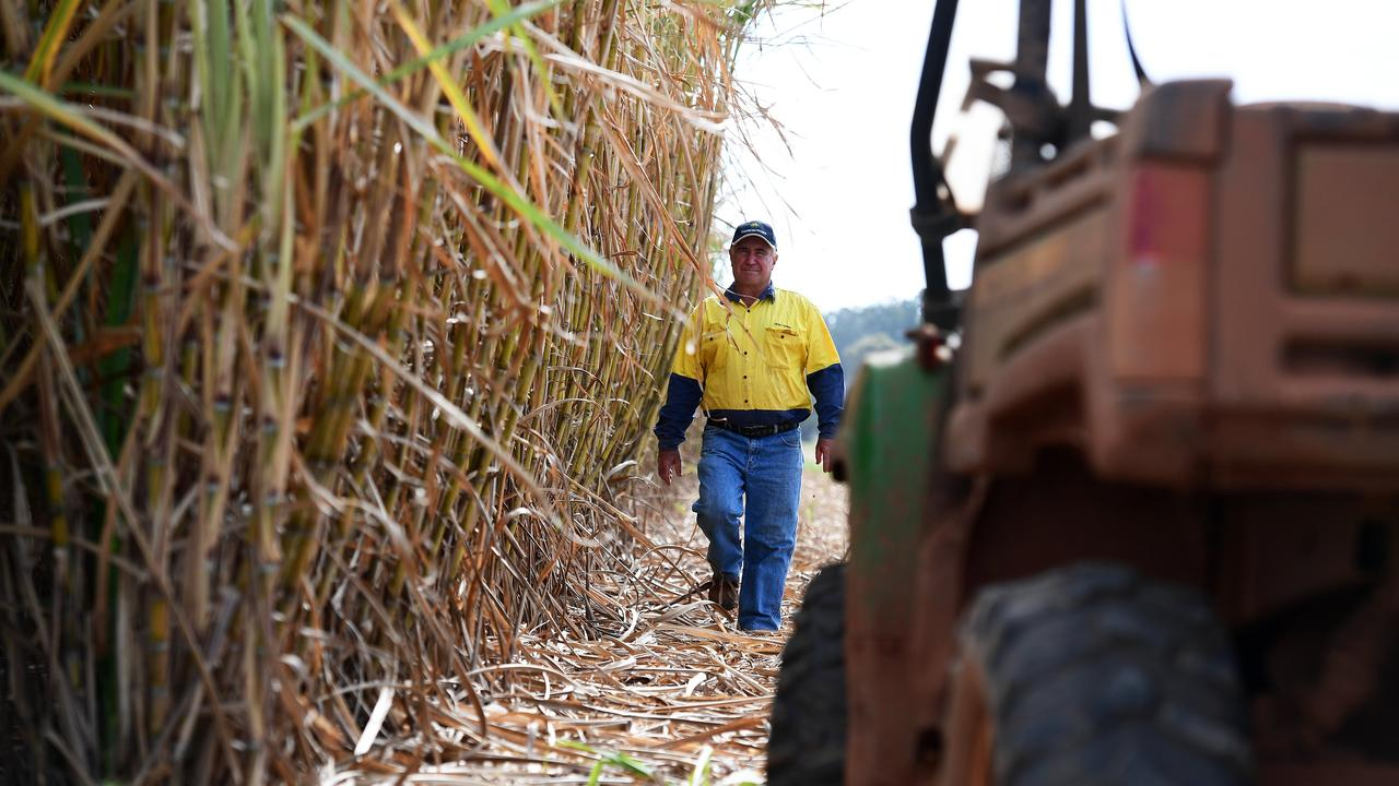 Childers sugarcane grower Mark Mammino.