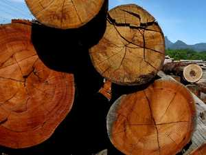 Truckie gets short end of stick for overloading logs