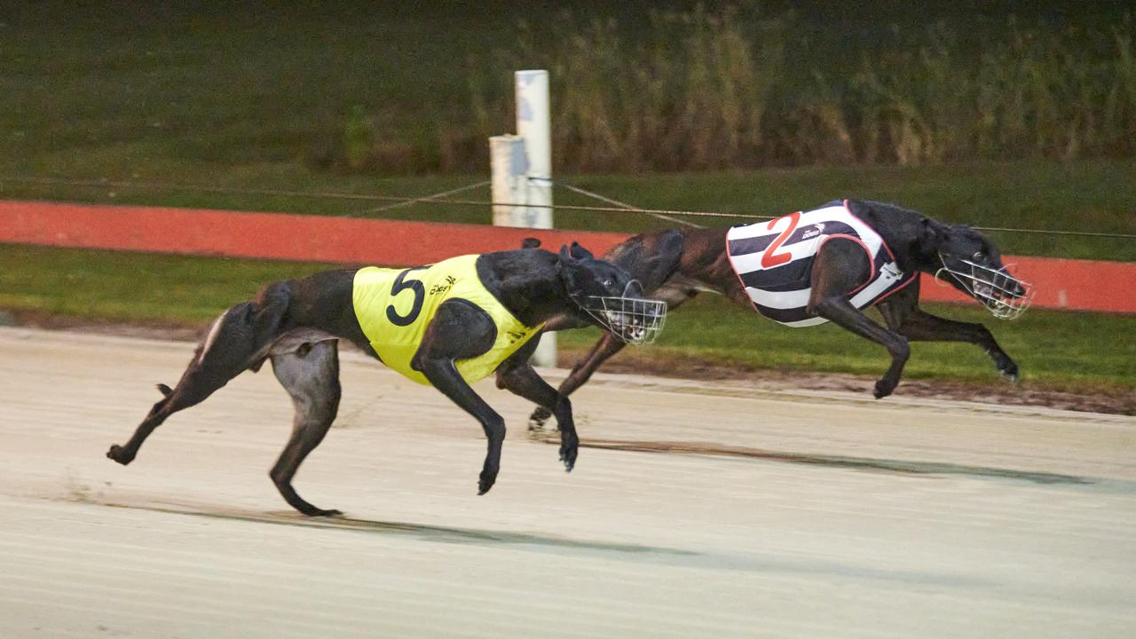 5- Profit Plan beats My Bro Bob in race 4 at the Grafton Greyhounds. Photo: Adam Hourigan