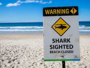 Beaches closed following shark sighting