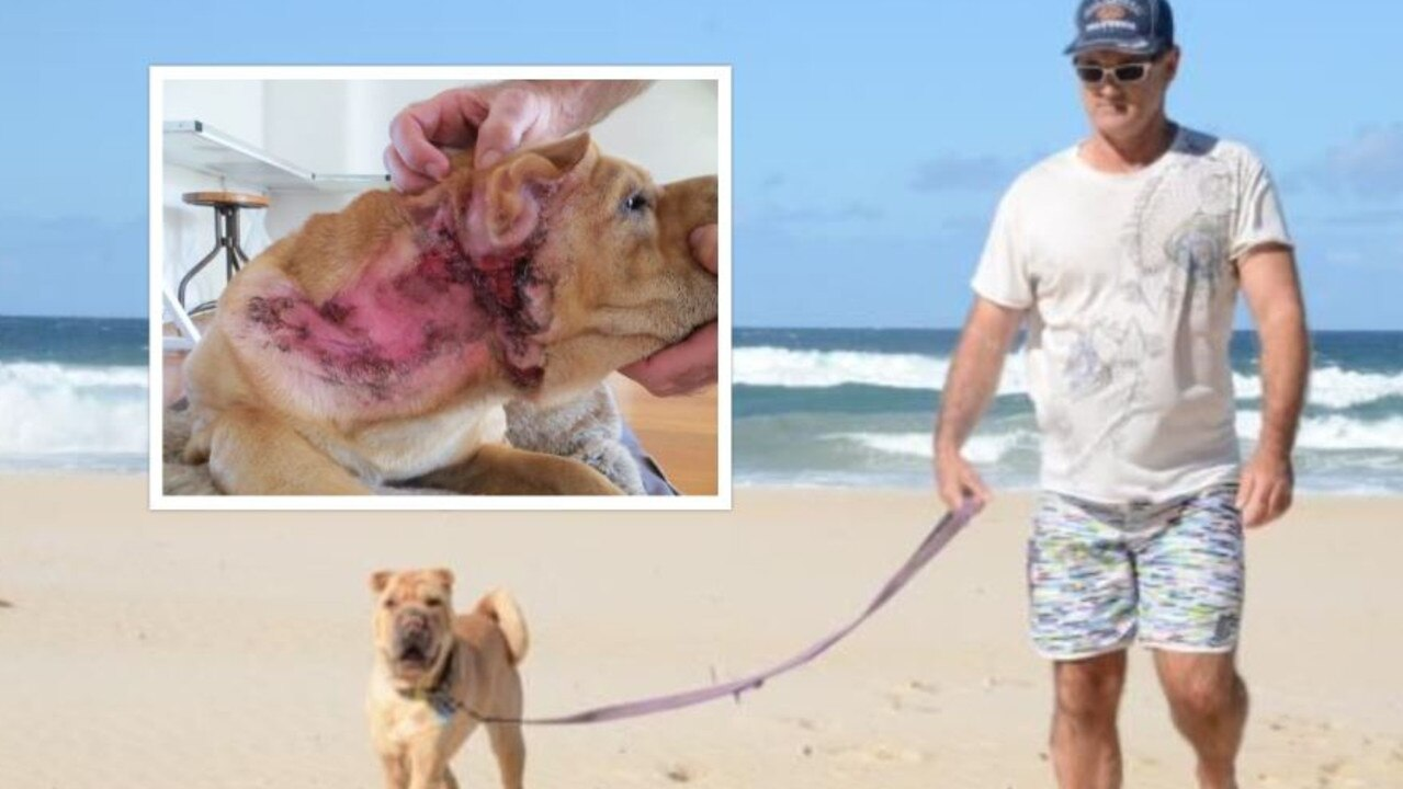 Richard Jordan is calling on Noosa Council to do more to deter dog owners from walking their pets off leash in prohibited areas after his dog was attacked in 2014.